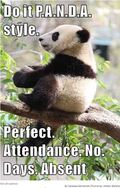 PANDA for perfect attendance