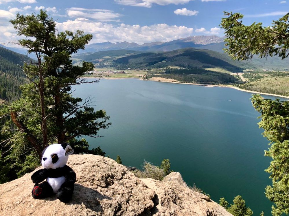 panda in mountains